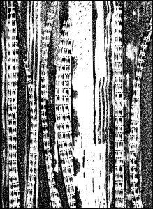 Runen / Zeichnung: © Ampersand Interart